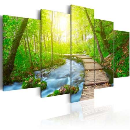 Obraz  W słonecznym lesie