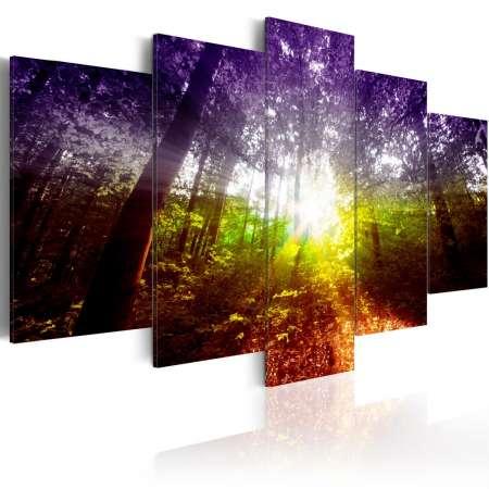 Obraz  Tęczowy las