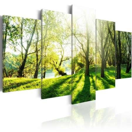 Obraz  Zielona polana