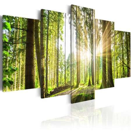 Obraz  Leśne królestwo