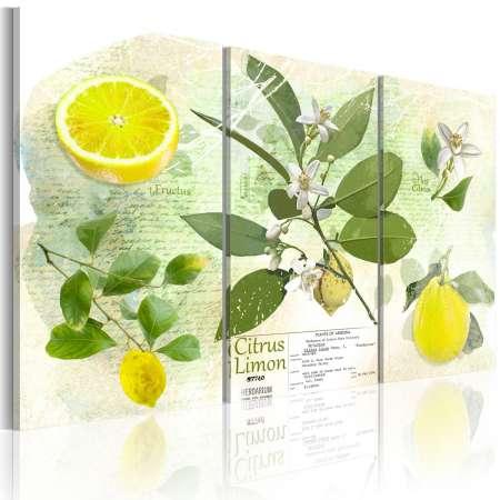 Obraz  Owoc cytryna