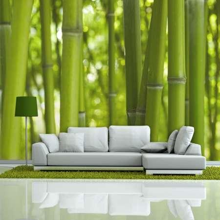Fototapeta  bambus  zielony