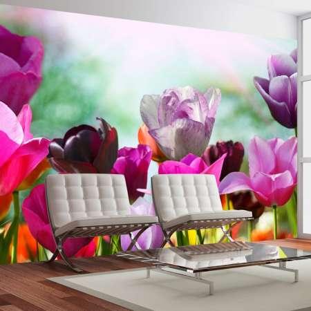 Fototapeta  Piękny wiosenny ogród, tulipany