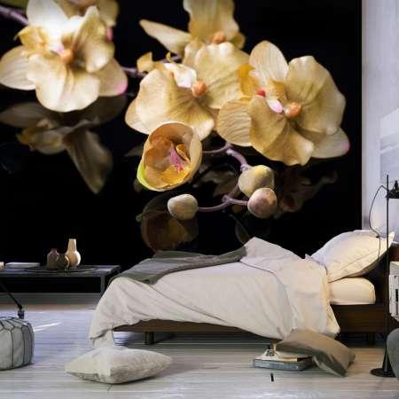 Fototapeta  Orchids in ecru color
