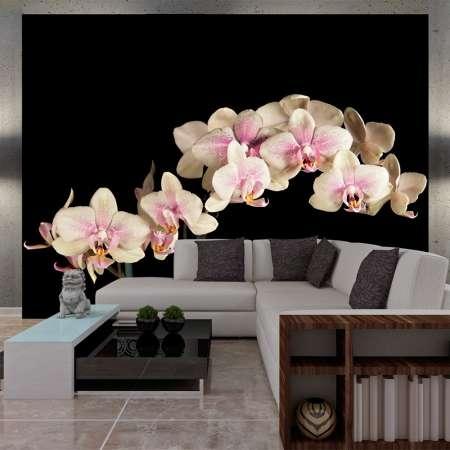 Fototapeta  Kwitnąca orchidea
