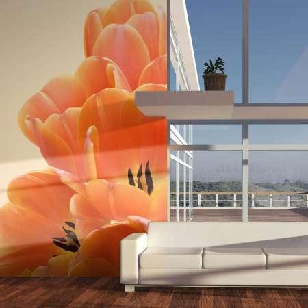 Fototapeta  Pomarańczowe tulipany