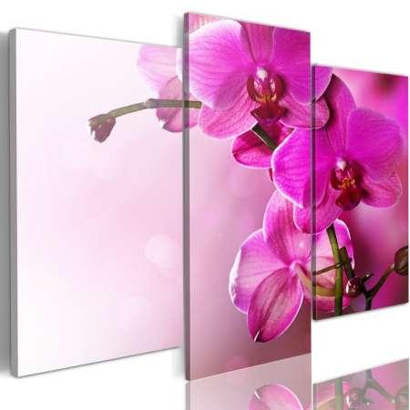Obraz  Ciemnoróżowa orchidea