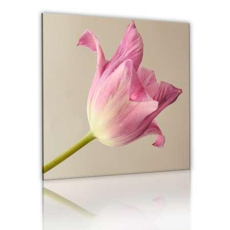 Obraz  Kwiat tulipanu