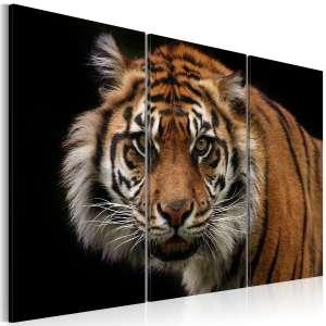 Obraz  Drapieżny tygrys