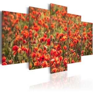 Obraz  Czerwone maki na zielonej łące