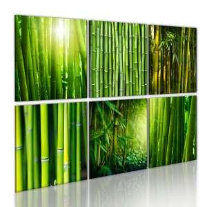 Obraz  Bambus w kilku odsłonach
