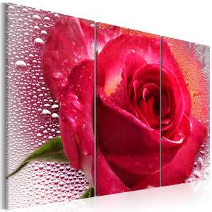 Obraz  Lady Rose  triptych