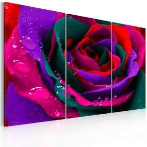 Obraz  Tęczowa róża
