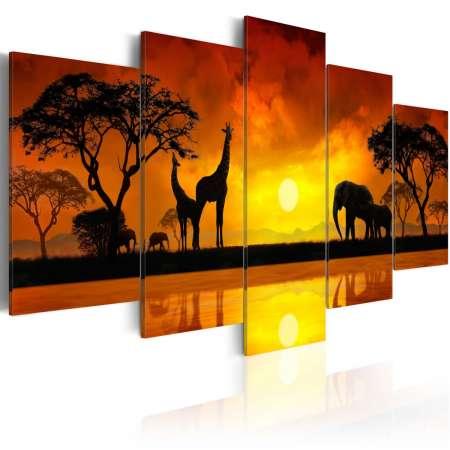 Obraz  Sawanna  zachód słońca