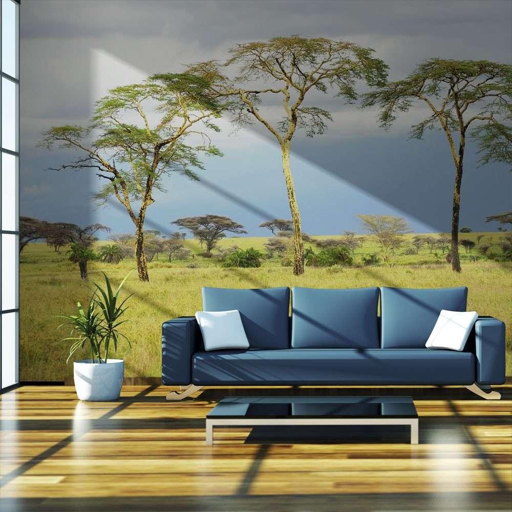 Fototapeta  Savanna trees