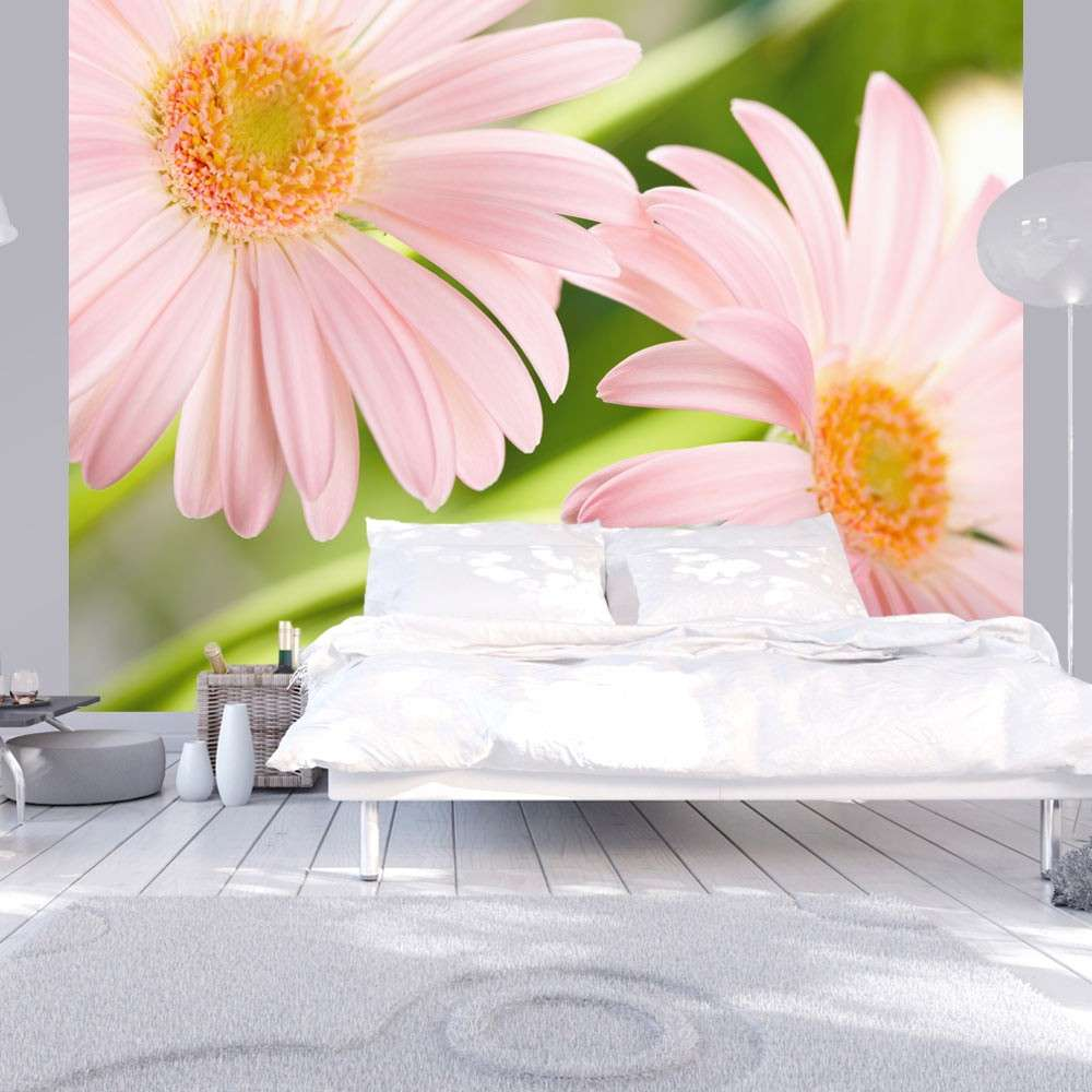 Fototapeta  Dwie różowe gerbery