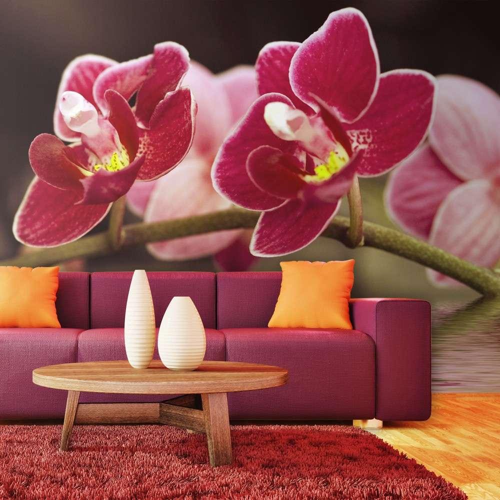 Fototapeta  Delikatne orchidee na wodzie