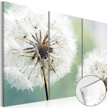 Obraz na szkle akrylowym  Puszyste dmuchawce [Glass]