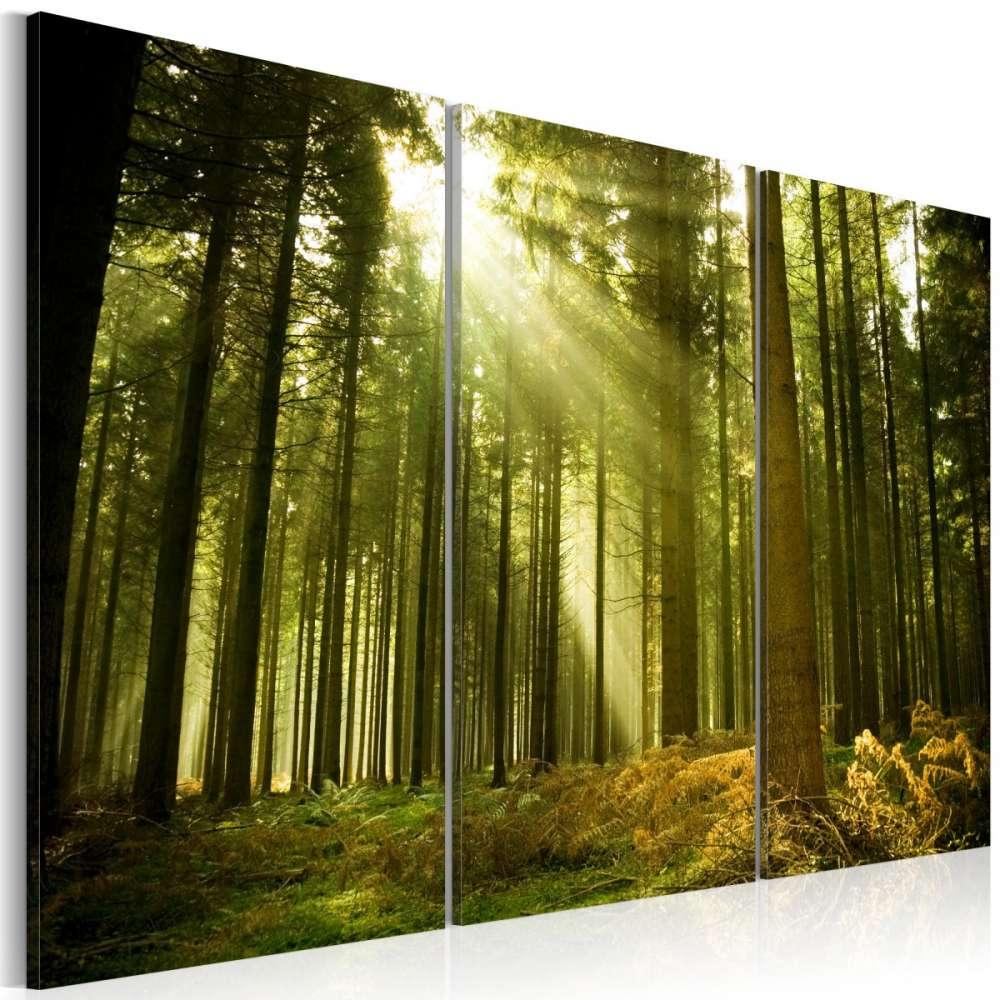 Obraz  Las  piękno natury