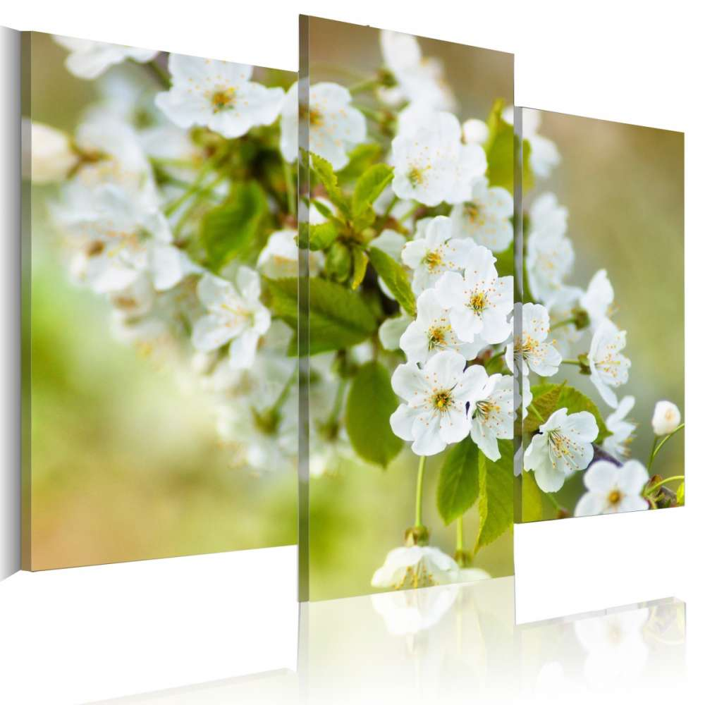 Obraz  Motyw z białymi kwiatami wiśni