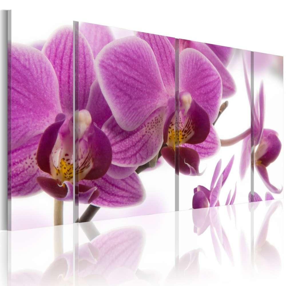 Obraz  Marvelous orchid