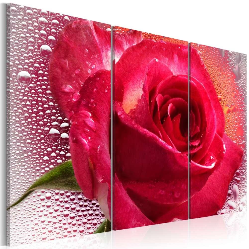 Obraz  Lady Rose  triptych